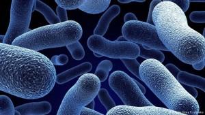 microba 1