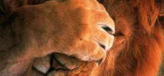 Guru_kérdések 6_borító_oroszlános 2